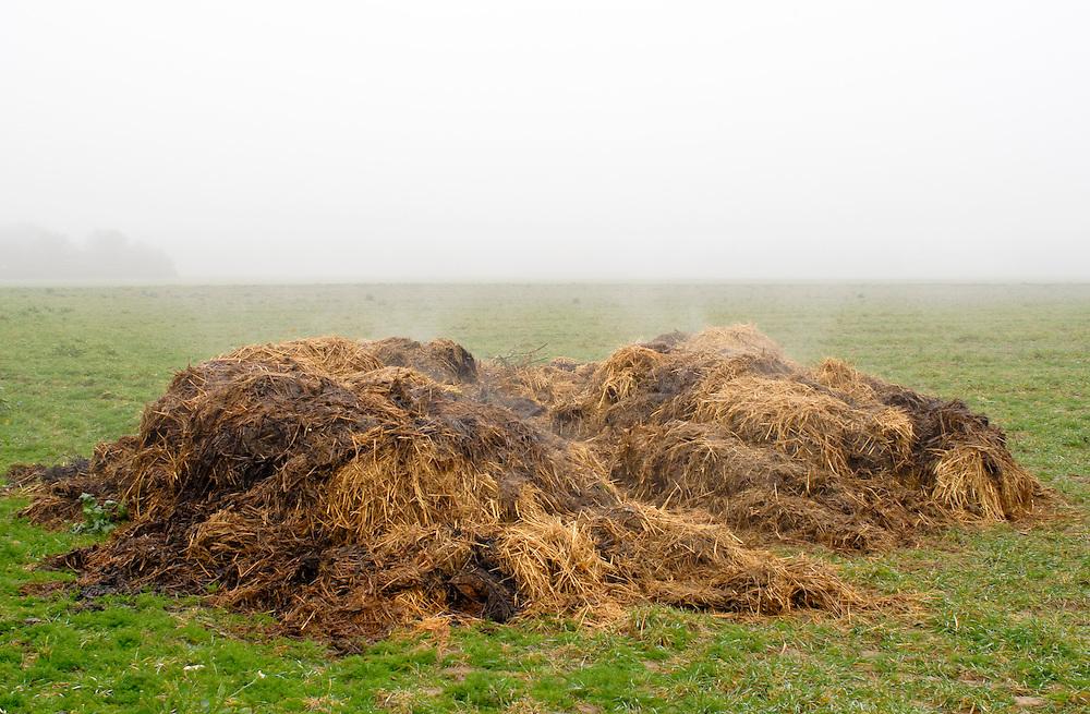 Ein dampfender Misthaufen auf einer Wiese  |  A steaming dunghill - dung pile - on a meadow    |