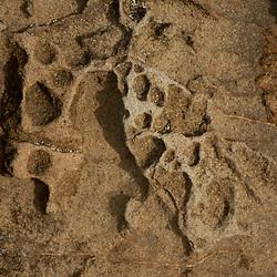 Eroded Sandstone Sea Stacks, Kalaloch Beach 4, Olympic National Park, Washington, US