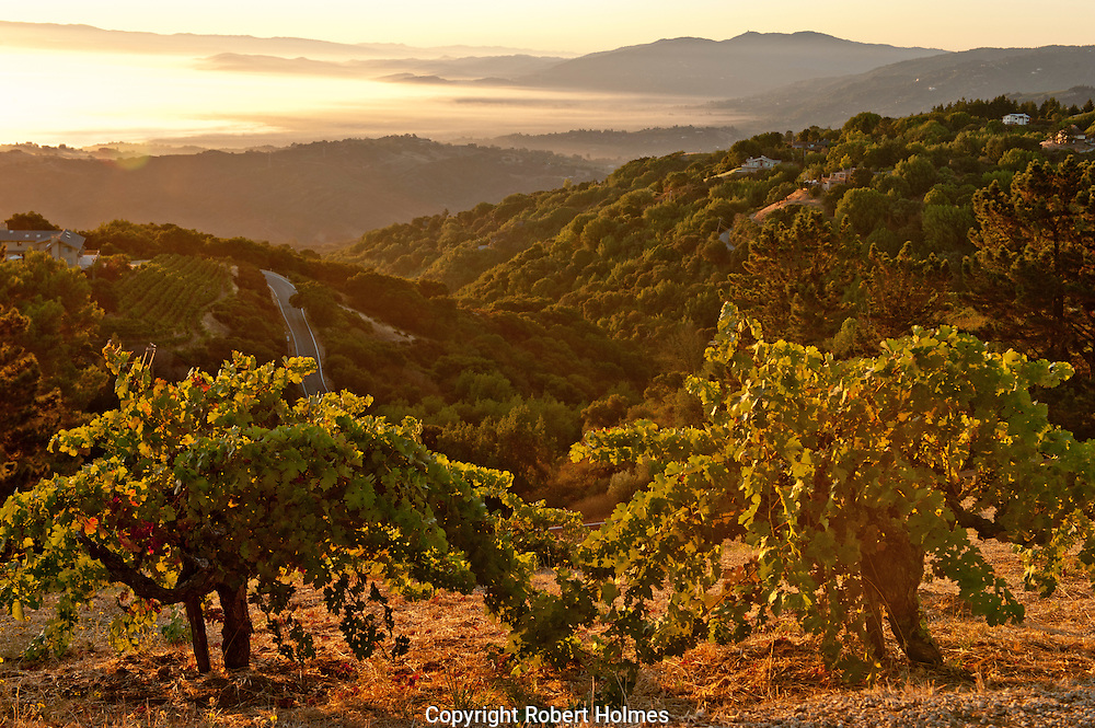 Ridge Vineyards, Santa Cruz Mountains, Cupertino, California