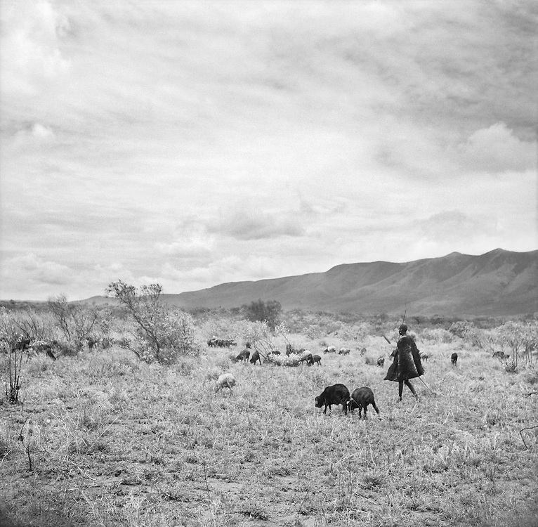 Cattle Shephard and Herdsman, Great Rift Valley Reservation, Ngong District, Kenya, Africa, 1937