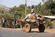 Ethiopia, Amhara Region Donkey pulled cart