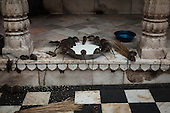 The Rat Temple, Karni Mata