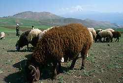 TURKEY DOGUBEYAZIT JUL02 - Sheep and shephers spend their morning on the hills surrounding Mount Ararat, Turkeys highest mountain. It is also a landmark symbolising the border between Turkey and Iran...jre/Photo by Jiri Rezac..© Jiri Rezac 2002..Contact: +44 (0) 7050 110 417.Mobile:  +44 (0) 7801 337 683.Office:  +44 (0) 20 8968 9635..Email:   jiri@jirirezac.com.Web:     www.jirirezac.com