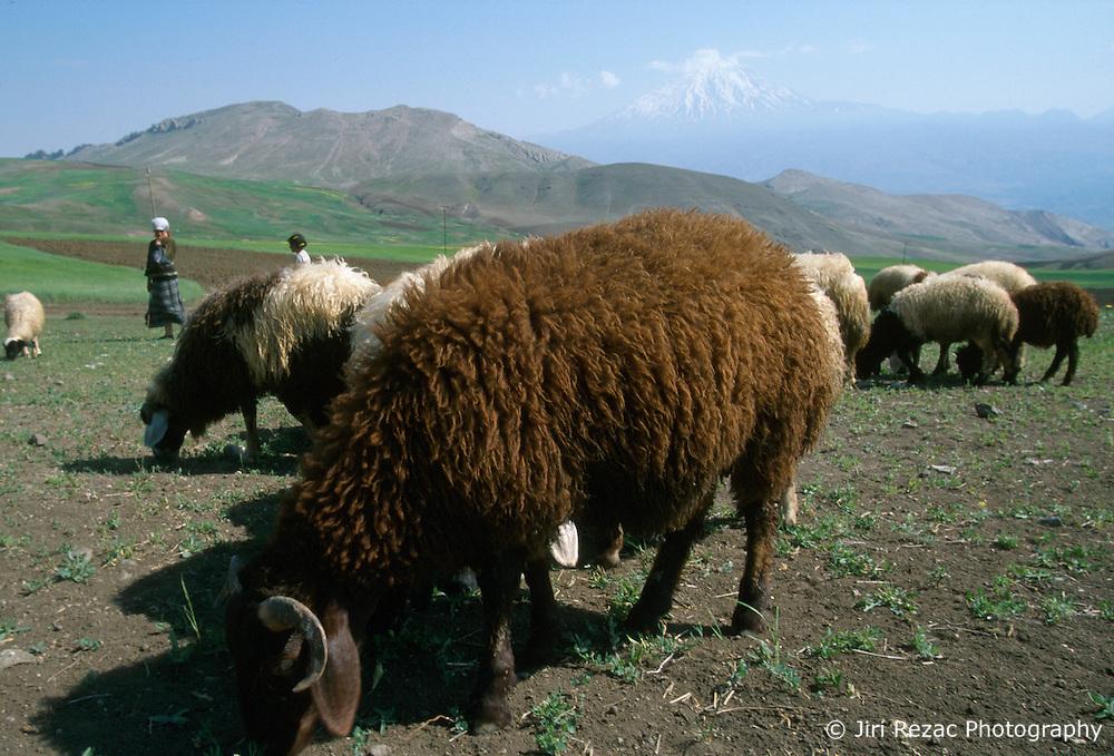 TURKEY DOGUBEYAZIT JUL02 - Sheep and shephers spend their morning on the hills surrounding Mount Ararat, Turkeys highest mountain. It is also a landmark symbolising the border between Turkey and Iran...jre/Photo by Jiri Rezac..© Jiri Rezac 2002..Contact: +44 (0) 7050 110 417.Mobile:  +44 (0) 7801 337 683.Office:  +44 (0) 20 8968 9635..Email:   jiri@jirirezac.com.Web:     www.jirirezac.com