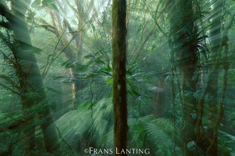 Jungle impression, Costa Rica