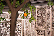 Orange fruit in front of carved stucco at El Bahia Palace, Marrakesh, Morocco