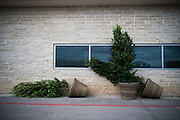 October 20, 2016: United States Grand Prix. Shrubs blown over in the wind at COTA