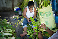 Philippines, Manila. Every year the Filipinos prepare the green palms for the Palm Sunday.