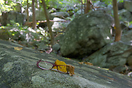 Vernon, New Jersey - (Lost and found) Glasses on a rock along the Appalachian Trail at the base of Wawayanda Mountain on Sept. 22, 2012.
