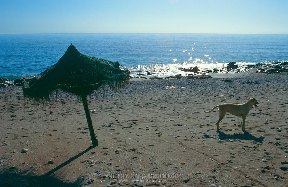 ESP, Spanien: Streunender Hund, Haushund (Canis lupus familiaris), steht allein an einem menschenleeren Strand, in der Nähe von einem Sonnenschirm, Mojacar, Andalusien | ESP, Spain: Stray dog, domestic dog (Canis lupus familiaris), standing alone on a empty beach, next to a parasol, Mojacar, Andalusia |