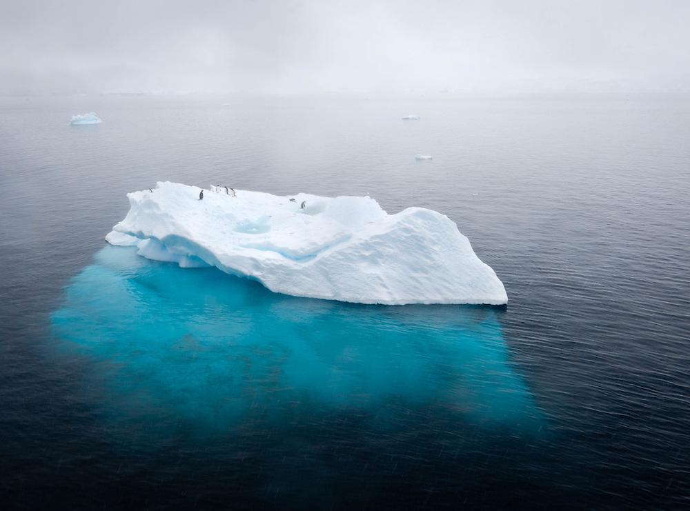 Pengüins on iceberg, Wilhelmina Bay, Antarctic Peninsula / Pingüinos sobre iceberg, Bahía Wilhelmina, Península Antártica