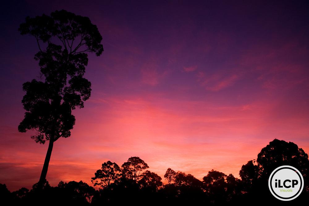Lowland rainforest at sunrise, Sepilok Forest Reserve, Sabah, Borneo, Malaysia