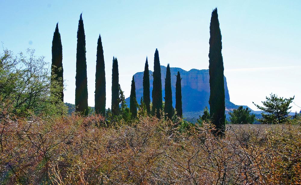 Trees line the Arizona horizon, with monument mountain in background