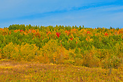 Reclaimed land. Near Coniston.<br />Greater Sudbury<br />Ontario<br />Canada
