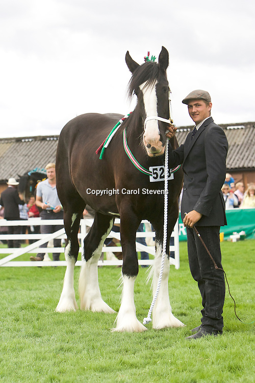 Mr &amp; Mrs R S Cockroft's Black Filly<br /> Springwell Pearl<br /> Sire  Metheringham Upton Sydney<br /> 4th  3yr old Filly or Gelding Class