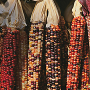 Massachussets, Old Deerfield; Fall Harvest Multi-color Indian Corn At Roadside Stand<br />