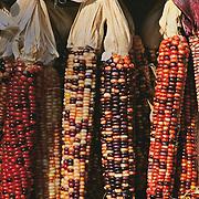 Massachussets, Old Deerfield; Fall Harvest Multi-color Indian Corn At Roadside Stand<br />