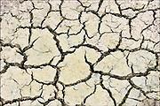 Nederland, Beuningen, 9-8-2016Door een lange periode van droogte is de grond gebarsten door uitdroging .Foto: Flip Franssen