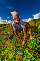 A Nepalese man collecting grass, above the Pokhara Valley, Nepal at Bimirapani.