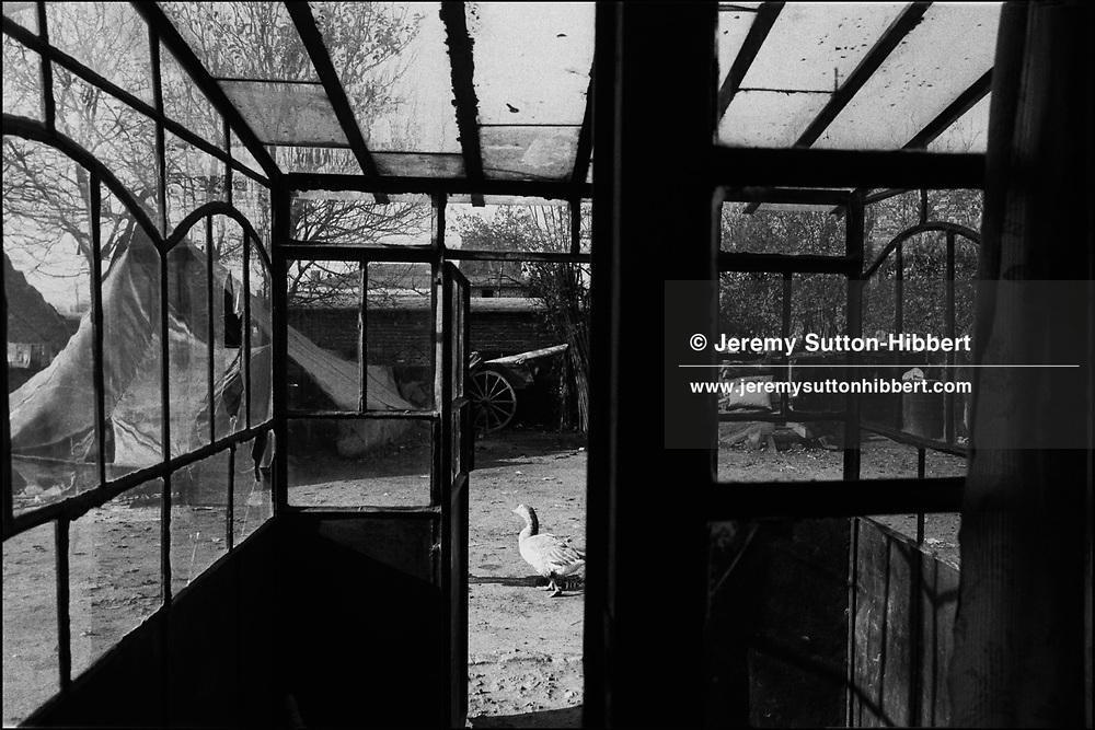 THE ENTRANCE TO A HOUSE. SINTESTI, ROMANIA. NOVEMBER 1996..©JEREMY SUTTON-HIBBERT 2000..TEL./FAX. +44-141-649-2912..TEL. +44-7831-138817.