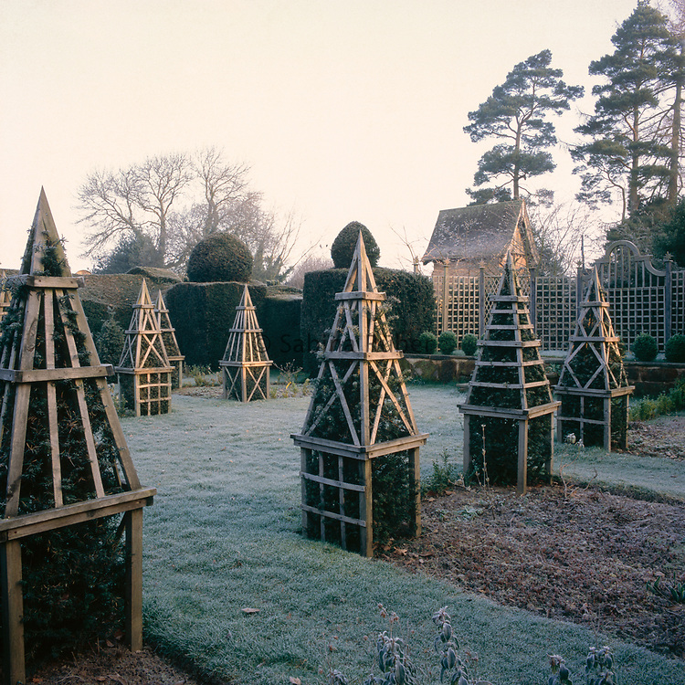 Taxus - yew-  pyramids covert with ornamental wood stucture on frosty morning, Bryan's Ground, Herefordshire