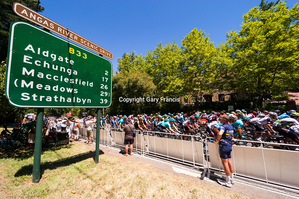 The Peloton ride trough Stirling during Stage 2, Unley to Stirling, of the Tour Down Under, Australia on the 17 of January 2018 ( Credit Image: © Gary Francis / ZUMA WIRE SERVICE )