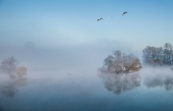 © Licensed to London News Pictures. 06/11/2017. London, UK.  Geese fly over a misty Pen Ponds in Richmond Park at first light. Parts of the UK are experiencing freezing temperatures today. Photo credit: Peter Macdiarmid/LNP