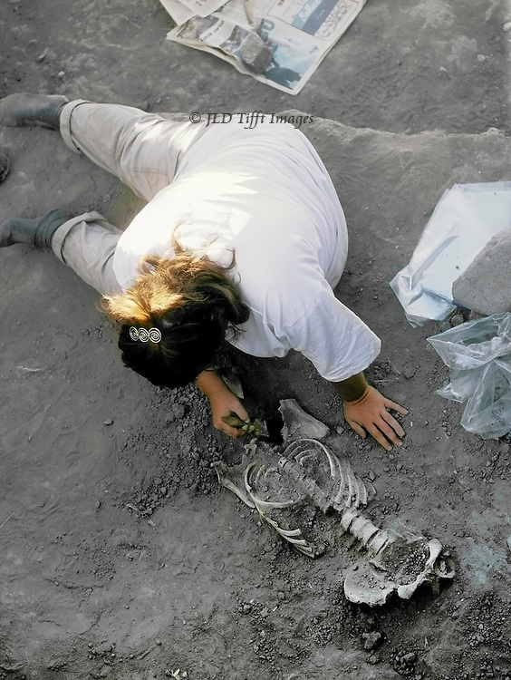 Archaeologist (a woman) excavating a human skeleton carefully brushes dirt from around the remains. She is seated in a twisted posture, leaning on one hand and wielding a brush in the other. Plastic finds bags lie near, held down with a rock.