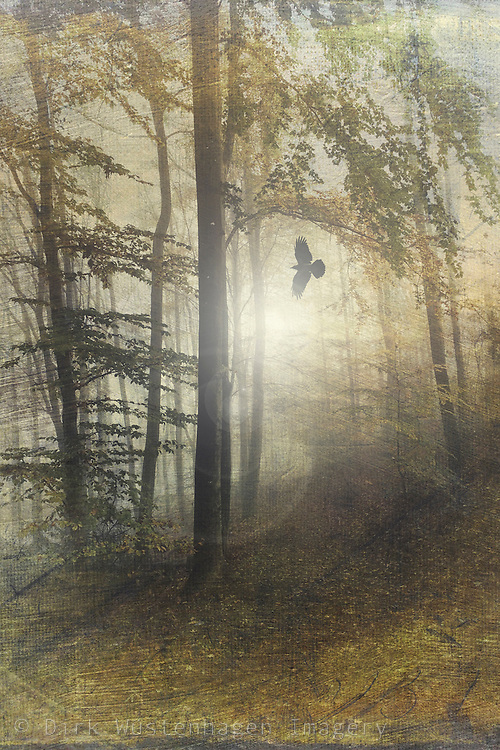 Misty summer forest in backlight - texturized photograph