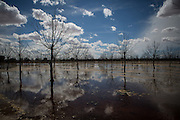 MESILLA, NM - APRIL 10, 2015:  A pecan orchard is flood irrigated, one of the more inefficient ways to irrigate trees. CREDIT: Max Whittaker for The New York Times