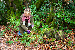 Carol Klein cutting back old fern fronds in early spring