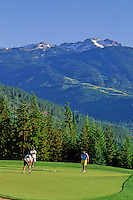Golfers putt on a green at the Chateau Whistler Golf Course with Whistler Mountain rising behind, Whistler, BC Canada.