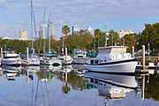 Boats at a marina with the Tampa skyline in the background