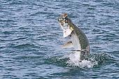 Pelagic, bottom, and inshore fish