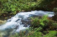 Juniper Springs, Ocala National Forest, Marion County, Fl.