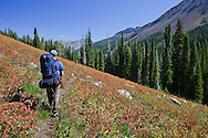 A backpacker hikes along the Cliff Creek canyon trail, Eagle Cap Wilderness, Oregon