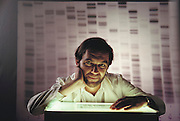 (1992) Professor Alec Jeffreys (b. 1950), English molecular biologist and discoverer of DNA fingerprinting. In the background is an image of an autoradiogram, the visualization technique used to compare DNA samples. A DNA fingerprint is a unique genetic sequence, which identifies any individual, human or animal, from a tiny sample of tissue such as blood, hair, or sperm. Its many uses include the identification and conviction of criminals, and the proving of family relationships, such as the paternity of a child. Only monozygotic 'identical' twins share the same DNA. DNA consists of two sugar- phosphate backbones, arranged in a double helix, linked by nucleotide bases. There are 4 types of base; adenine (A), cytosine (C), guanine (G) and thymine (T). Sequences of these bases make up genes, which encode an organism's genetic information. The bands (black) on the autoradiogram show the sequence of bases in a sample of DNA. Jeffreys is a professor in the Department of Genetics at the University of Leicester, England. MODEL RELEASED