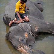 Pinnawala Elephant Orphanage, Altruism or Business?