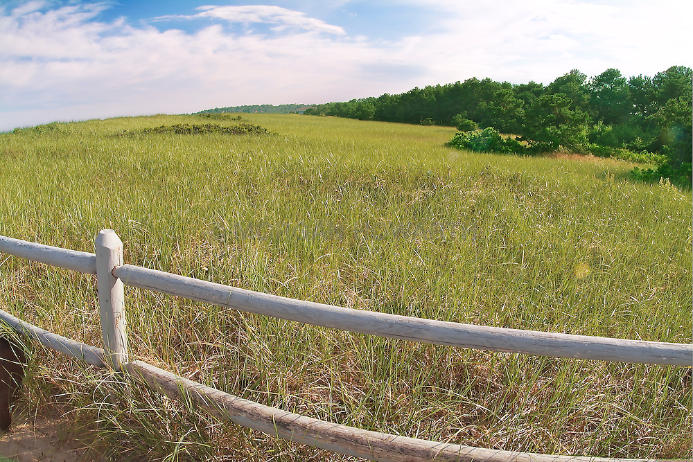 Maine Coast seagrass