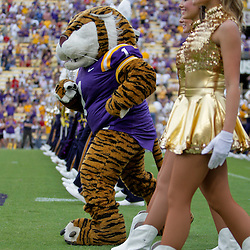 19 September 2009:  LSU Tigers mascot Mike The Tiger and the Golden Girls dancers perform on the field before the start of a 31-3 win by the LSU Tigers over the University of Louisiana-Lafayette Ragin Cajuns at Tiger Stadium in Baton Rouge, Louisiana.