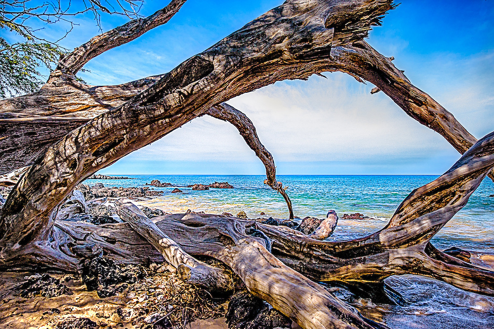 Driftwood on Puako Beach,Hawaii