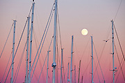 Masts of the yachts at the Newport Shipyard as a september fullmoon rises