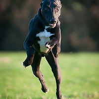 Albert running. Its his favourite thing to do.