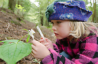 A young girl examining a lily, Trillium ovatum in the redwood forest on Ryan Creek in Eureka, California.