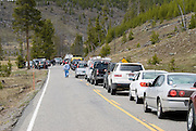 Wildlife traffic jam in Yellowstone National Park WY