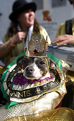 07 February 2010. New Orleans, Louisiana, USA. <br /> The 'Barkus' parade sets off with Saints mania clearly the flavour of the day for New Orleans' only dog Mardi Gras parade. Saints fans gather in the French Quarter in anticipation of the big game in Miami later in the day as the home team goes head to head with the Indianapolis Colts for Superbowl 44. <br /> Photo; Charlie Varley.