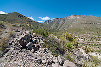 Once an ancient Permian ocean reef, these hills and cliffs that are part of the Guadalupe Mountains in Northwestern Texas near Salt Flat are an example of one the world's very best and oldest fossilized coral reefs. Now part of the Chihuahuan Desert the area is teeming with sea life fossils.