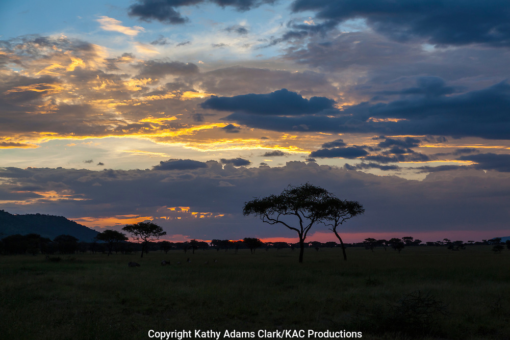 sunset with an acacia tree, on the Serengeti, Tanzania, Africa.