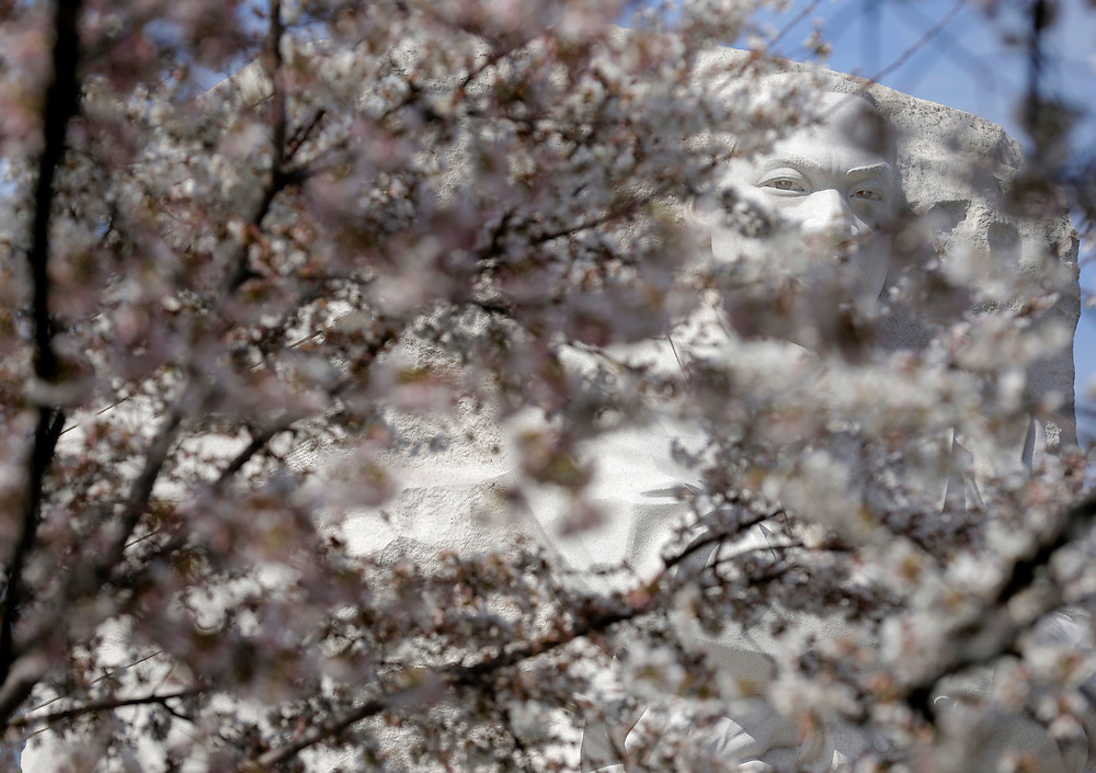 The statue of civil right leader Martin Luther King is seen behind blooming cherry trees in Washington March 23, 2016.      REUTERS/Joshua Roberts