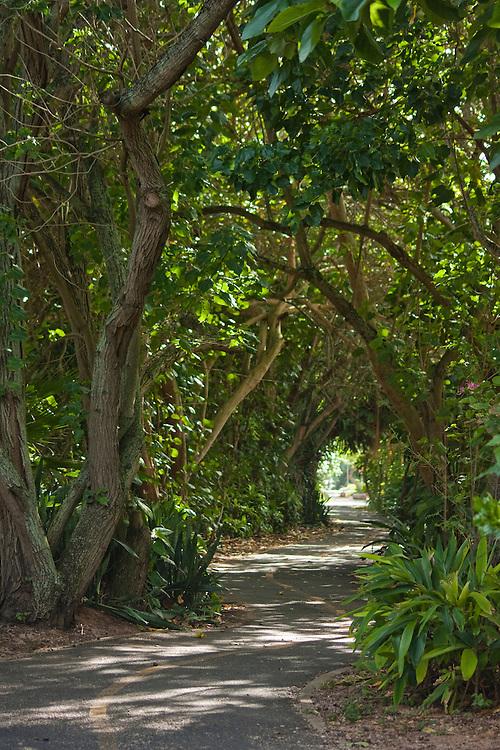 Bike path through a tree tunnel on Oahu's North Shore, Hawaii